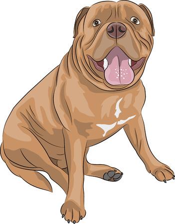 Dogo de Burdeos, en una posición sentada aislados en fondo blanco Ilustración de vector
