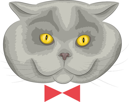 Portrait cat of breed British silver color isolated on white background. Vector