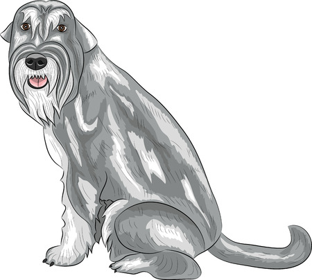Dog breed schnauzer middle color salt and pepper. Vector