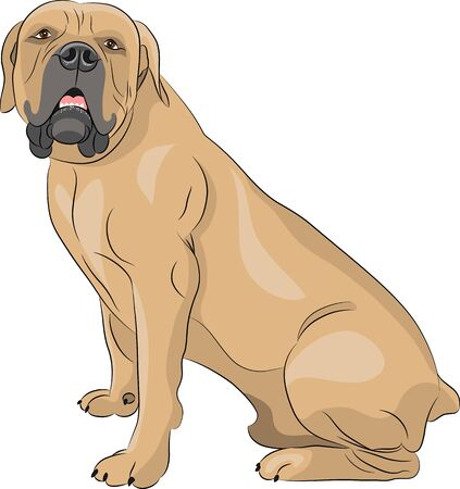 boerboel dog: South African Boerboel Dog in the rack.