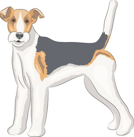 curly tail: Color drawing fox terrier dog breed while standing.