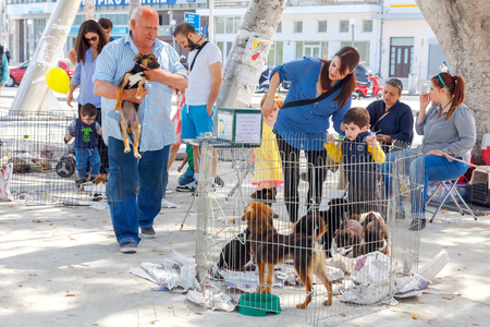 philanthropy: Heraklion, Greece - April 24, 2016: Charity event to help the homeless dogs in the central square of Heraklion. Editorial
