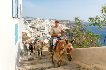 house donkey: Santorini, Fira - April 30, 2016: Donkeys to transport tourists from the harbor to the town Fira, located on the top of the mountain.
