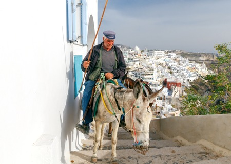 fira: Santorini, Fira - April 30, 2016: Donkeys to transport tourists from the harbor to the town Fira, located on the top of the mountain.