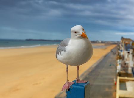closeup photo of a pigeon at a beach
