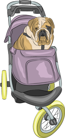 Vector. English bulldog in the stroller.
