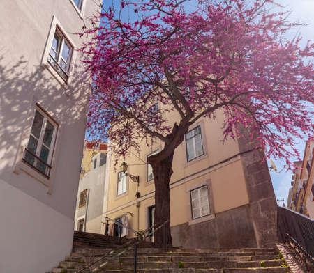 Lisbon. Old city street on a sunny morning. Standard-Bild
