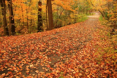 A country path is a blaze of color on a quiet Autumn's day. Banco de Imagens