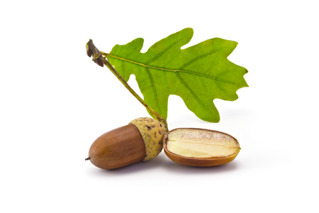 one acorn and oak leaf isolated on white background photo