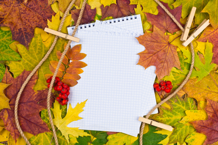 white paper for text on a colorful background of autumn leaves photo