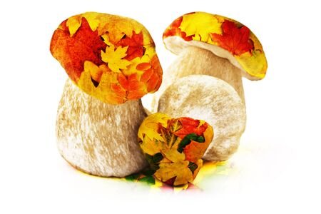 exposure: Ceps and autumn leaves double exposure, on a white background