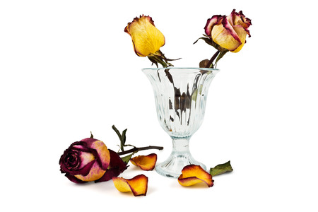 sapless: Glass vase with dry roses and petals fallen dry on a white background