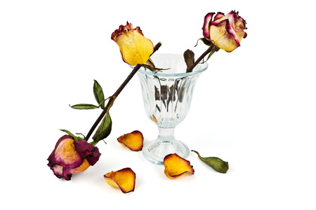 Glass vase with dry roses and petals fallen dry on a white background photo