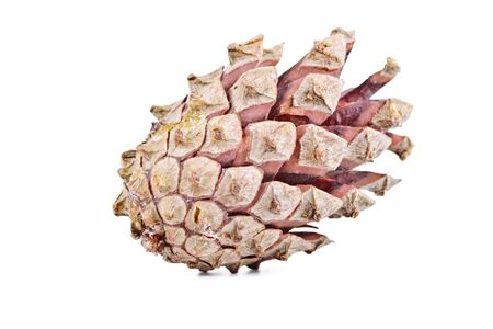 disclosed: Dry disclosed pine cone on a white background