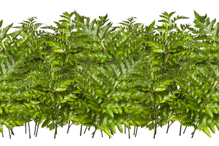 endless: Seamless, endless pattern of branches and leaves decorative fern