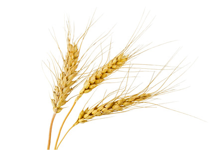 spikelets: Three rye spikelets on a white background