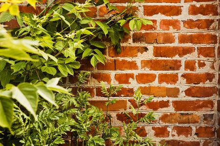 bldg: Old brick wall overgrown with green bushes and grass