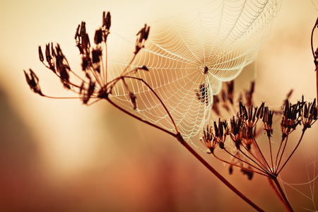 Cobweb on grass with drops of morning dew Stock Photo