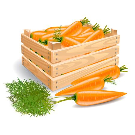 tare: A wooden box full of fresh carrots and a row of three carrots on a white background. Stems and leaves of carrots Stock Photo