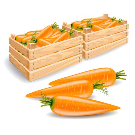A wooden box full of fresh carrots and a row of three carrots on a white background. Stems and leaves of carrots Stock Photo