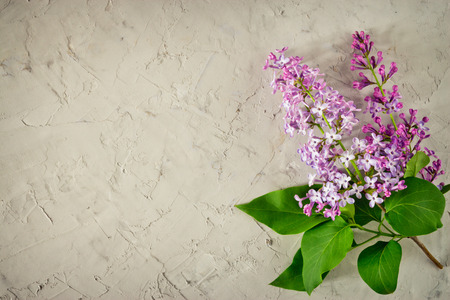 Twig of lilac with green leaves on gray concrete background top view