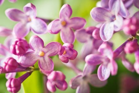 Close up of lilac flowers Imagens