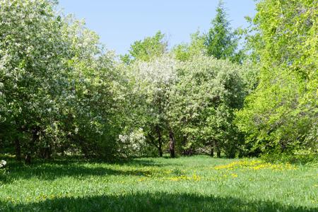 Pequeño prado con césped verde y árboles en un parque en un día soleado. Esta escena fue tomada en Komsomolsk-on-Amur en Rusia. Foto de archivo