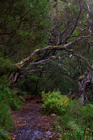 Wet footpath in a tropical forest. Portuguese island of Madeira Zdjęcie Seryjne