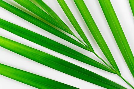 Close-up of tropical plant leaf on white background