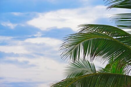 Palm tree branches and leaves against blue cloudy sky