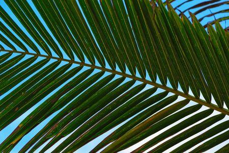 Close-up of natural palm leaf against blue sky