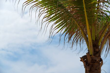 Low angle view of the palm against sky. Da Nang, Vietnam 版權商用圖片