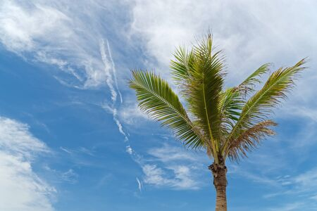 Scenic view of single palm tree against blue sky on sunny day 版權商用圖片