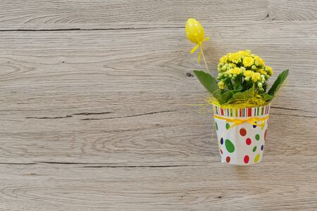 Easter decoration. Fresh plant with yellow flowers in decorative colorful pot against wooden background Standard-Bild - 143779517