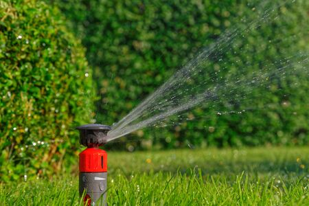 Automatic lawn sprinkler while irrigation against green hedge
