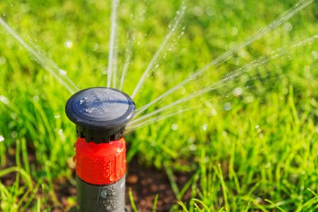Watering of green lawn by automatic pop-up sprinkler