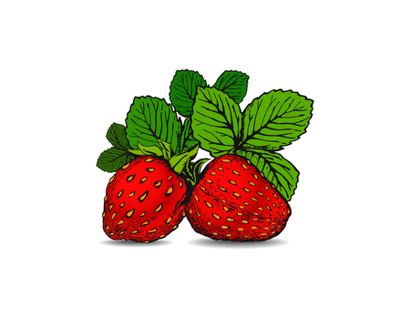 Hand drawn strawberry with leaves on the white background. Design for natural sweets and candy with strawberry filling, health care products, textile, advertising, card, menu or banner. 矢量图像