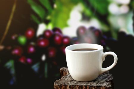 Witte kopje koffie of thee op houten plaat over vage plantage van koffieboom met zonlicht.