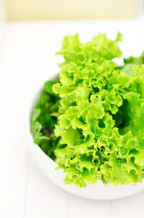 cilantro: Cilantro verduras frescas