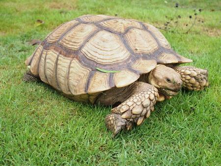 tortuga: Tortuga