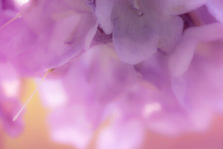 close up to sweet petal flower for background