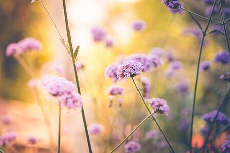 purple flower in garden with light