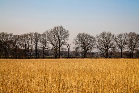 cropland: Cropland in the winter with nice contrast - Montferland, The Netherlands Stock Photo