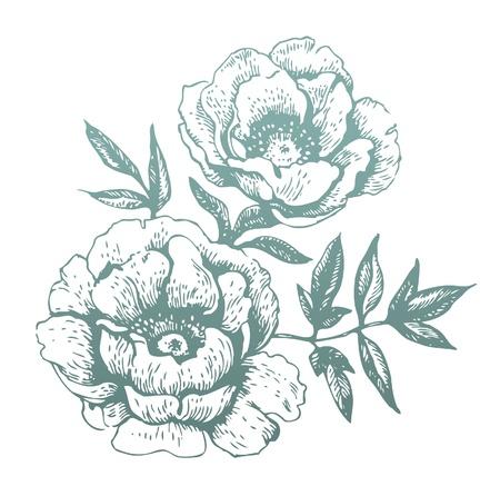 tatouage fleur: Fleurs Hand-drawn illustrations Illustration