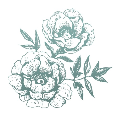 Flowers  Hand-drawn illustrations Vector