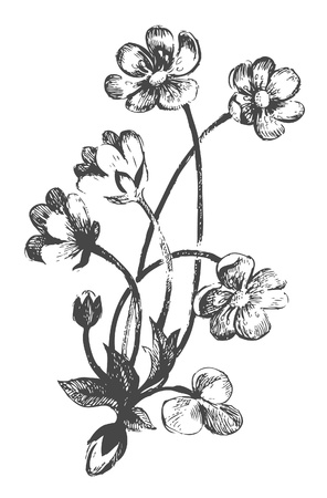 flower sketch:  Flowers.Hand-drawn illustrations Illustration