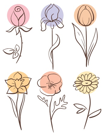 camomiles:  Flower set  Illustration
