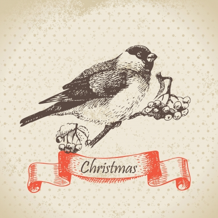 ashberry: Christmas bullfinch and ashberry. Hand drawn illustration
