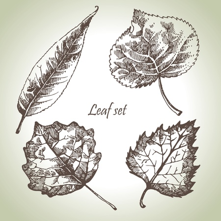 poplar: Hand drawn leaf set