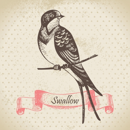 Swallow bird, hand-drawn illustration  Vector